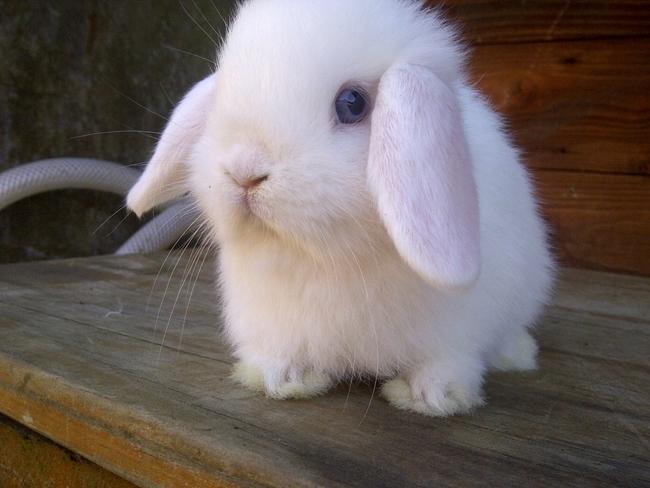 Rabbits 1