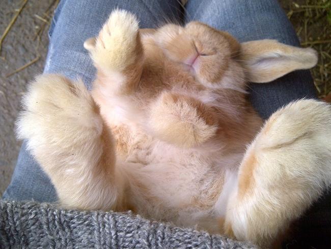 Rabbits 12