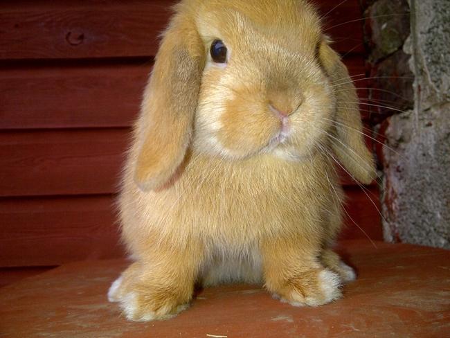 Rabbits 7