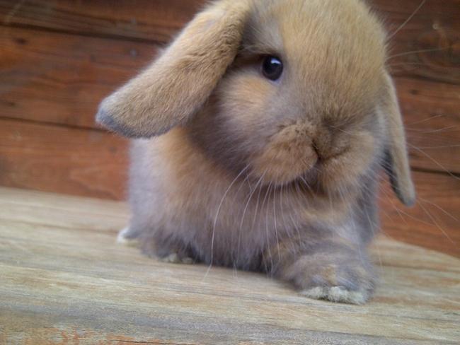 Rabbits 8