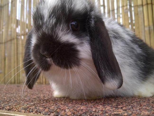 Rabbits 9